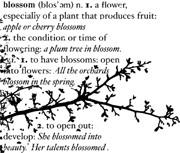 Memory Box Open Studio Cling Stamp Blossom Branch