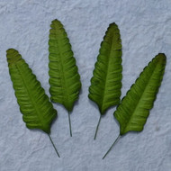 Wild Orchid Crafts Gardenia - Green Fern Leaves 70 mm