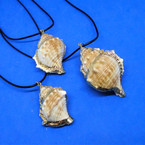 "16""-18"" Black Cord Necklace w/ Mixed Size Couch Shell Pendant w/ Gold Trim .56 each"