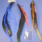 "8"" Feather Hair Extension w/ Beads Asst Colors  .40 ea"