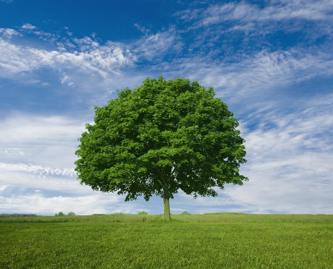nice-tree.jpg