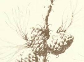 cassenoix-19435-984.jpg