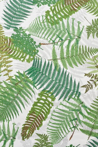 Fernarium Wallpaper in Ivory & Leaf