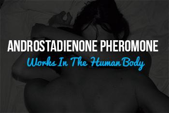 pheromone Androstadienone