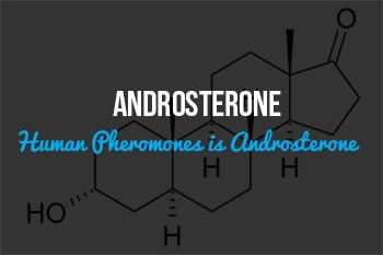 Pheromone Androsterone