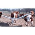 Cattle Rubs
