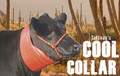 Sullivan's Cool Collar- WHILE SUPPLIES LAST