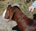 Goat Neck Chains