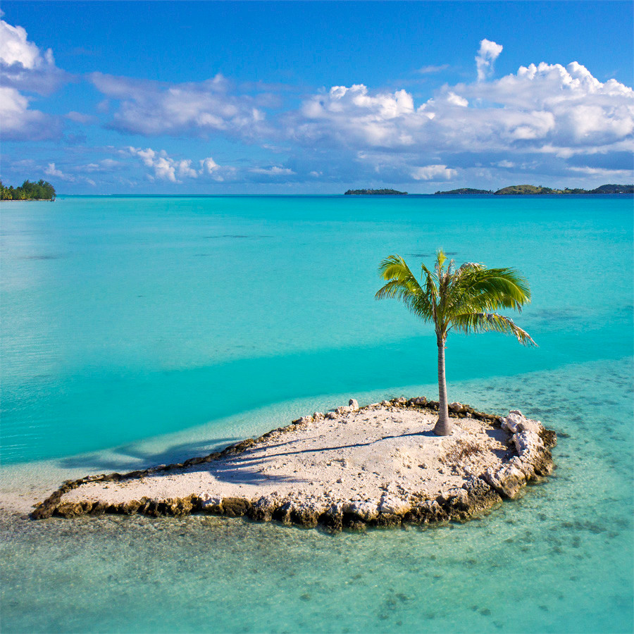 Palm Tree Island: Bora Bora, French Polynesia