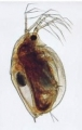 Living Specimens and Supplies