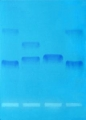 DNA and Dye Samples for Electrophoresis