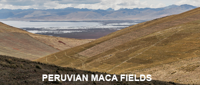 Peruvian Maca Fields