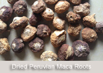 peruvian-maca-roots-dried