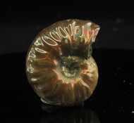 Opalised Ammonite 11