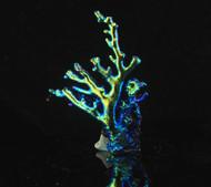 Dichroic Coral Specimen 4
