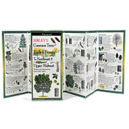 Sibley's Common Trees of Trails & Forests of the Northeast & Upper Midwest