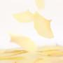 Ginkgo leaf transparent sticky memo notes Small