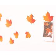 Appree Maple magnet set