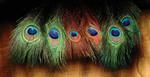 Hareline Peacock Eyed Sticks