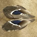 Nature's Spirit Mallard Wings