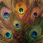 Nature's Spirit Peacock Eye