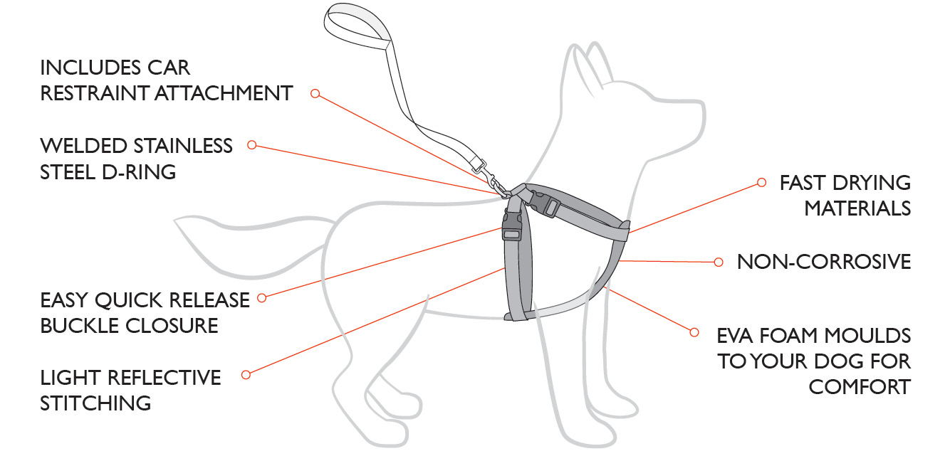 fitting a dog harness