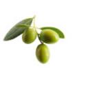 337080-antipasti-olives-isolated-iii.jpg
