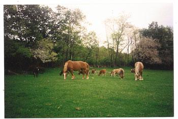 springhorse.jpg