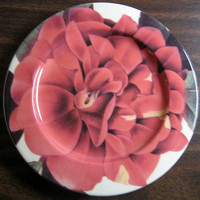 Rosey Pink Closeup Flower Petal Detail with Leaves Italy Plate
