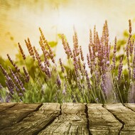 Cedar Leaf & Lavender (Type) Fragrance Oil