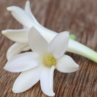Tuberose Fragrance Oil