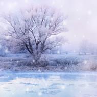 Winter Wonderland Fragrance Oil