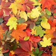 Leaves Fragrance Oil