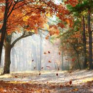Falling Leaves Fragrance Oil