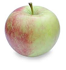 winesap-apple-logo