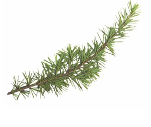 Himalayan Cedar Essential Oil, 5 mL
