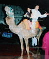 Camel for Party