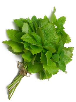 lemon balm for eczema