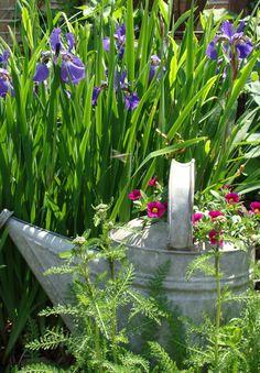 Rustic garden watering can