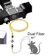 Dual Optogenetics Fiber