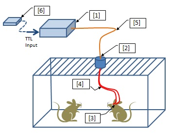 optogenetics-toolbox-for-free-moving-animals.jpg