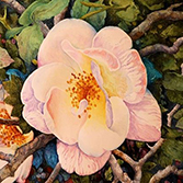 Watercolor Techniques with Dennis Pendleton, Saturday, August 4, 12-1:30pm, $60, Denver store only
