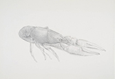 Demo & Dialogue: Metalpoint Drawing & Book Signing with Tom Mazzullo, Saturday, April 6, 1-3pm, FREE