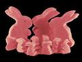 Hare Raising Experience