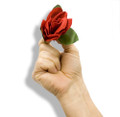 Match to Rose