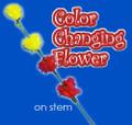 Color Changing Flower On Stem