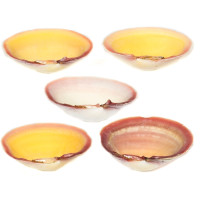 Clamshell Paint Dishes