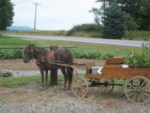 AmishQuilter Amish Buggy