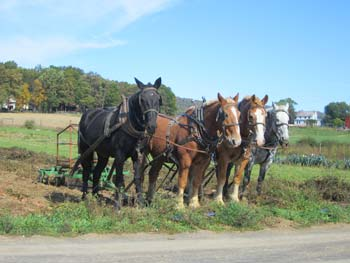Amish Field Work with Horses