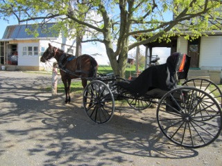 Amish Sarah's Horse and Buggy